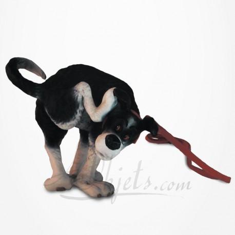Rufus - Chien - Arrête !!!